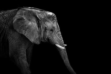 Picture of elephant on a black background. Black lives matter, even with a racist history. Racial justice matters. You can get help with anti-racism training and resources from Dr. Edmond in New Jersey, New York, Pennsylvania, Chicago and more!